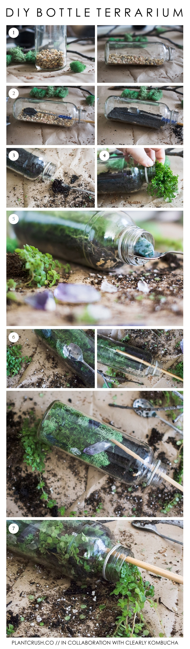 Terrarium Bottle DIY | plantcrush.co